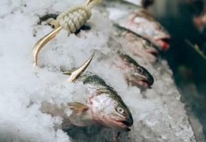 WT Fish